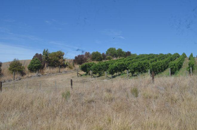 Mountain range after Picton