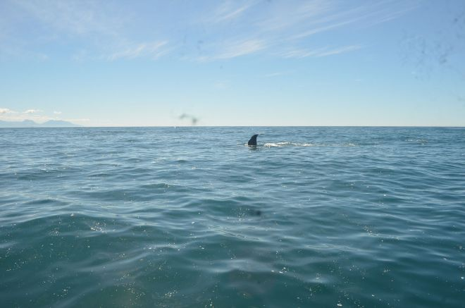 The Whale surfacing and its tail flip before diving back to the depth of the ocean
