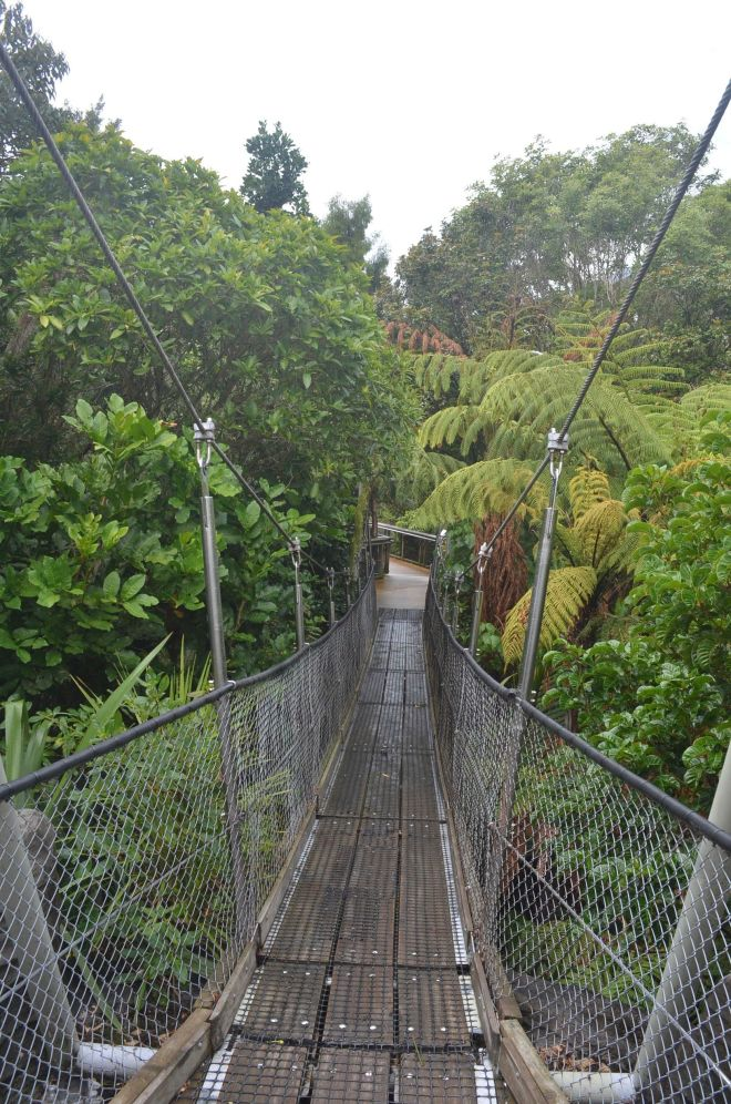 The outdoor section of the Museum which depicts NZ's natural forest and landscapes.