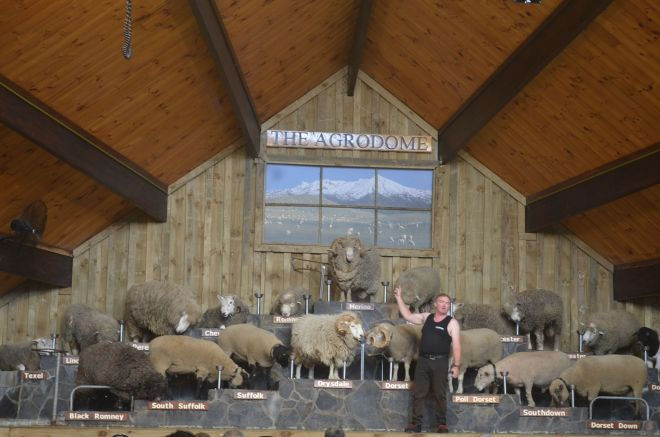 A peek into farm life at the Agrodome