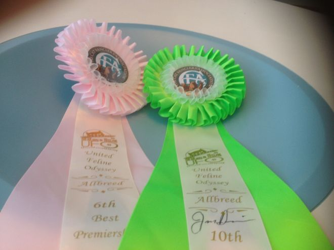 Rossettes from the first show.